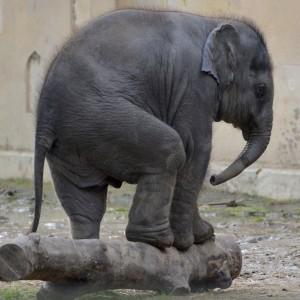 elephant-1005475_1920
